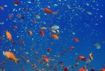 Finding nemo / Water ... where Nemo and other great sea creatures lurk. / by Marie-France Lamothe