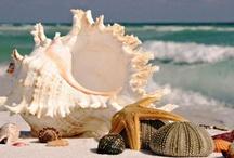 Seashells By The Seashore / by Esther Menashe
