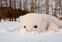 Cute animals / These adorable critters prove cuteness isn't just for kids. / by Diono USA