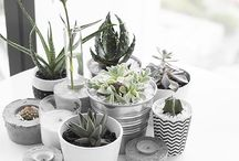 Indoor Greens / Cacti, Succulents, Pine Trees and Garlands