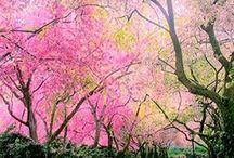 Árvores / O álbum onde a Natureza brilha!