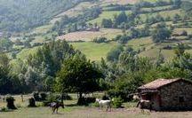 L'Asturçon / L'Asturçon est un poney qui vient des régions des Asturies au nord de l'Espagne, c'est un croisement entre Sorraia cheval d'Iberia, Garrano du nord du Portugal et poney celtique, bien que leurs ascendances ne sont pas connues avec certitude.