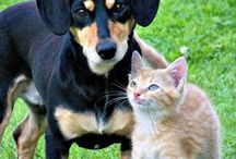Pets / All things pets! Pet care, pet treats (dog treat recipes), pet accessories, and more.