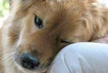Animal Love | Protection / Love and Protection for Our Precious  Animal Friends / by Lacie Whitney