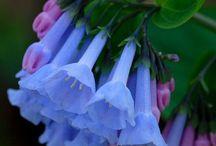 Gorgeous Blooms / #flowers #blooms #gardening