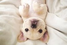 S m i l e / Lovely pets and cute animals -- random things that make me smile  / by Fernanda Serrate
