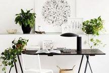 Rośliny filtrujące powietrze / Najlepsze rośliny wpływające pozytywniie na powietrze w naszym domu.  #rośliny