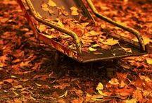 AUTUMN / My favorite season of all. / by Dorina Igna