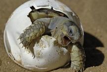 TURTLES- love turtles / by Erinne Matte-Daniels