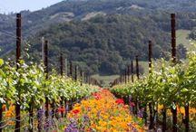 California: Where I Live & Play / by Janice Kelly