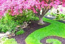 fresh air..ah, that's what i needed... / outside stuff: patios, ponds, gardens, pools, backyards :) / by Lynette Kay VanWinkle