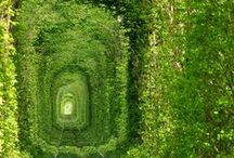 Ethereal Gardens / Capturing mystical and magical outdoor settings.  It is very likely that fairies inhabit this space.
