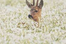 Inspiration / Things that inspire Near and Deer. Animals, deer, animal photos, cute animals.