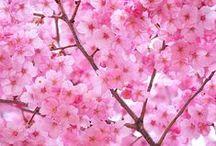 Spring/Summer 2016 / Fêtez l'arrivée du printemps en pimentant vos tenues avec des bijoux frais et colorés !