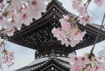 Nouvelle collection Sakura / Poésie et instants bucoliques, flânez sous les cerisiers en fleurs