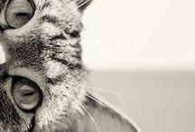 CATS / by Dorina Igna