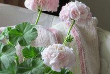 Fiori / Flower Arrangements