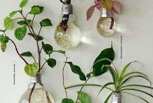 Plants decó
