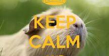 guinea pigs / morčata