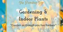 Gardening & Indoor Plants / It is said that we should garden as if we lived forever - spending time with plants - indoor or outdoor - caring for them connects us with nature, keeps us mentally balanced and forges love. This board collects tips for the beginner and the seasoned gardner as well as to those who want to cultivate indoors, on the terrace or in their small backyards.
