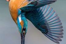 Birds[鳥]