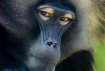 Monkey[猿]