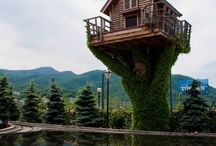 Home Sweet Home  #Tree House