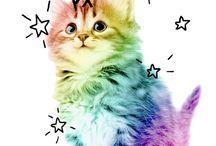 Fondos de gatos