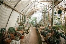 Horticulture / Garden Design