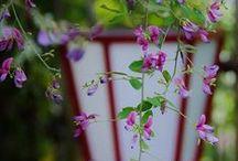 Flower / 綺麗な花