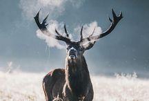 Cornudos / Fotos de animales con cuernos