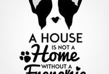 Pets   A House Is Not A Home Without A Frenchie! / Frenchies