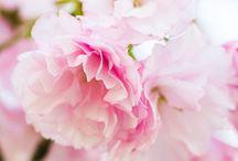 Gorgeous Gardens and florals / My dream garden  / by Alexandra Hayler