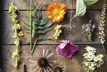 Natural medicine / Natural medicine, healthy nutrition & herbal homemade remedies / by The Creative Adventure ♡