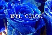 IFYL Color / by John Tesh
