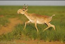 Animal Intel :)