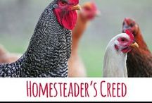 The Best of Our Simple Homestead / A collection of popular posts from the homesteading and homemaking blog Our Simple Homestead. http://oursimplehomestead.com