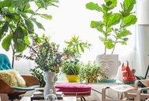 HOME // Indoor plants / by Melissa Kelly