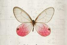 ILLUSTRAZIONI: farfalle