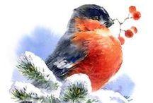 ANIMALI: bird - uccelli