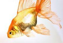 ANIMALI: PESCI FISH