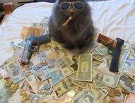Gangsta cats