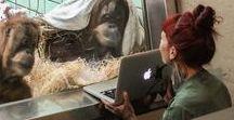 Orangutans / Latest news about orangutans all over the globe.