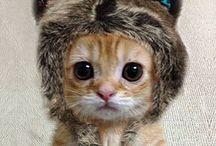 Fun cat