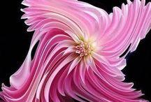 BEAUTIFUL FLOWERS / by Cyndi Desmarais