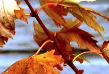 Autumn As I Recall. . . / by Linda Meents