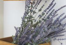 Lavender Blue /Purple / by Mrs.Day