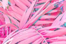Pink Flamingo / My Favorite Color. Inspiration for using more pink in your life and your home.