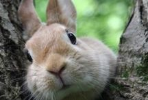 Beach Bunnies / I have a pet bunny, here are some other cute buns.