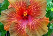 Tropical Flowers / I Love Orchids
